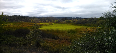 View of Green Valley Marsh